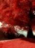 lauvigo userpic