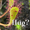 drosera wants a hug