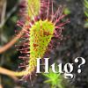 drosera wants a hug
