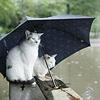 Mischief: CatsRain