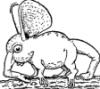phyllohoppla bambola