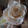 london_fleur
