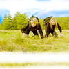 {gate} trio sam jennifer