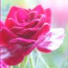sameen5 userpic