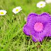 seegrim: puple felt flower