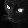 cat: Черный кот глаза