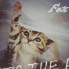 fox_kairy userpic