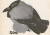 Тихая птица
