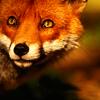 foxwood81 userpic