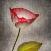 rose0908 userpic