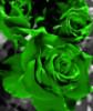 irish_rose89 userpic