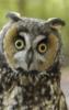 robinellen: owl