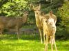 deer faces