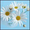fiorino userpic