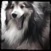 Sheri: Cooper -Yawn