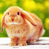 shadowsong_13: Animals - Bunny