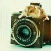 мыша на фотоаппарате