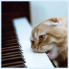 Aine Silveria: Piano nommer (cat gnawing on piano keys)