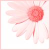 Clari Clyde: Icon: Daisy