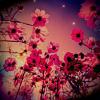 polly_mur