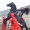 Horse Reer