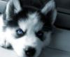elusive_husky userpic