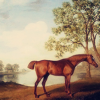 nature: george stubbs horse