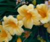 ophelia2007 userpic