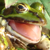 HAPPY FROGGY