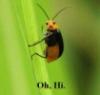 thegreenbin userpic