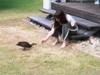 narelle, regnavi, duck