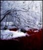 the_icewriter userpic