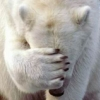 urso_curioso