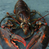 lobstermonarch userpic