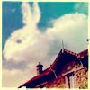 Bunny Cloud