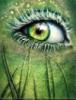 Глаз зелёный