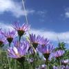 трава, лето, небо, цветы, синий