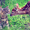 Melly: kitty + deer