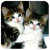pat: NF kitties