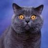 Взволнованная кошка