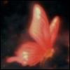butterflycrmsn userpic