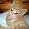 kat_rowe: giggly kitteh