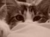 y_katy userpic