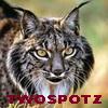 twospotz userpic