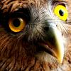 [owl] ummm