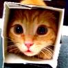 cardboardboxluca_icon