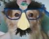 Didy Groucho