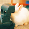 Bunny Looking Into An Old Polaroid Camer