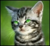 greeneyed kitty