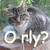 Orly?